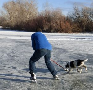 Covering the puck with my stick blade, I score one for the humans.